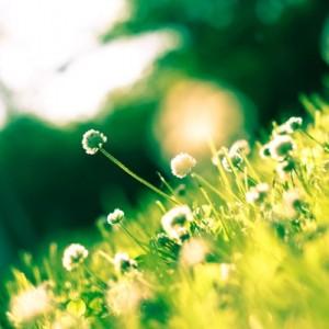 Nature-Spring-032